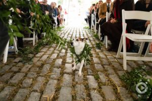 Lauxmont Farms weddings, wedding dogs, dog ring bearers, pets at weddings